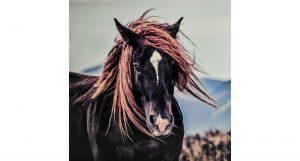 Tavla Häst